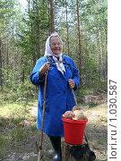 Старая женщина в лесу с собранными грибами. Стоковое фото, фотограф Сергей Костин / Фотобанк Лори