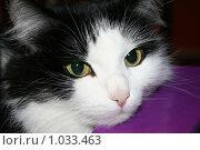 Купить «Взгляд кошки», фото № 1033463, снято 3 декабря 2006 г. (c) Диана Кан / Фотобанк Лори