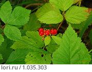 Купить «Костяника каменистая (Rubus saxatilis)», эксклюзивное фото № 1035303, снято 25 июля 2009 г. (c) lana1501 / Фотобанк Лори