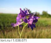 Купить «Цветочек», фото № 1038071, снято 8 июля 2009 г. (c) Дмитрий Иванов / Фотобанк Лори