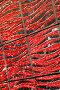 Плитка, фото № 1043603, снято 22 октября 2007 г. (c) Илья Лиманов / Фотобанк Лори