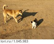 Кошка и  собака. Стоковое фото, фотограф Корчагина Полина / Фотобанк Лори