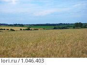 Купить «Русское поле», эксклюзивное фото № 1046403, снято 1 августа 2009 г. (c) lana1501 / Фотобанк Лори