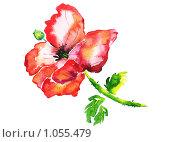 Красный мак. Стоковая иллюстрация, иллюстратор Екатерина Букреева / Фотобанк Лори