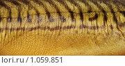 Купить «Фактура.Рыба», фото № 1059851, снято 4 декабря 2007 г. (c) Влад  Плотников / Фотобанк Лори