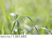 Роса на траве. Стоковое фото, фотограф Пырков Алексей / Фотобанк Лори