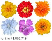 Купить «Цветы на белом фоне», фото № 1065719, снято 20 августа 2009 г. (c) Neta / Фотобанк Лори