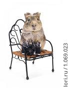 Купить «Лохматый фотограф», фото № 1069023, снято 27 февраля 2009 г. (c) Толоконов Дмитрий Львович / Фотобанк Лори