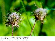 Цветок. Стоковое фото, фотограф Артём Картушин / Фотобанк Лори