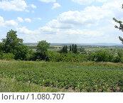 Купить «Южный пейзаж - Анапская долина», фото № 1080707, снято 16 июня 2009 г. (c) Емельянова Светлана Александровна / Фотобанк Лори