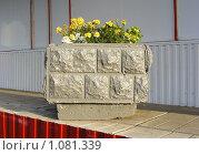 Купить «Декоративный вазон с цветами около магазина», эксклюзивное фото № 1081339, снято 4 сентября 2009 г. (c) lana1501 / Фотобанк Лори