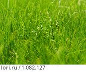 Купить «Зеленая трава», фото № 1082127, снято 13 мая 2009 г. (c) Andrey M / Фотобанк Лори