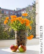 Купить «Осенний натюрморт», фото № 1082179, снято 10 сентября 2009 г. (c) Илюхина Наталья / Фотобанк Лори