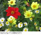 Разноцветье. Стоковое фото, фотограф Алина Бучинская / Фотобанк Лори