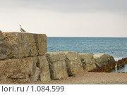 Старый волнолом и чайка. Стоковое фото, фотограф Виктор Косьянчук / Фотобанк Лори