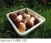 Лоток с белыми грибами. Стоковое фото, фотограф Павел Красихин / Фотобанк Лори
