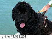 Купить «Мокрый пес», фото № 1089251, снято 9 сентября 2009 г. (c) Вера Тропынина / Фотобанк Лори