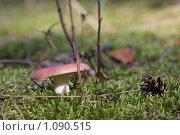 Купить «Сыроежка», фото № 1090515, снято 6 сентября 2009 г. (c) Константин Исаков / Фотобанк Лори