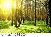 Купить «Лес», фото № 1094203, снято 11 июня 2009 г. (c) Валерия Потапова / Фотобанк Лори