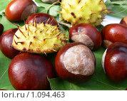 Купить «Плоды каштана», фото № 1094463, снято 1 октября 2008 г. (c) Татьяна Баранова / Фотобанк Лори