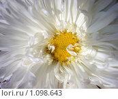 Цветок. Стоковое фото, фотограф Оксана Шагова / Фотобанк Лори