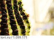 Начало цветения кактуса. Стоковое фото, фотограф 1 / Фотобанк Лори