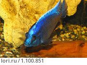 Купить «Рыбка», фото № 1100851, снято 9 августа 2008 г. (c) Мария Виноградова / Фотобанк Лори