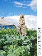 Девушка с лейкой поливает капусту в огороде. Стоковое фото, фотограф Rumo / Фотобанк Лори