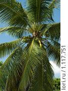 Купить «Пальма», фото № 1117751, снято 9 сентября 2008 г. (c) Анатолий Никитин / Фотобанк Лори