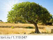 Купить «Одинокое  дерево», фото № 1119047, снято 8 августа 2009 г. (c) Вероника Галкина / Фотобанк Лори