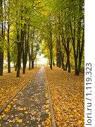 Осень. Аллея в парке. Дорожка к калитке , ведущая в никуда... Стоковое фото, фотограф Светлана Силецкая / Фотобанк Лори