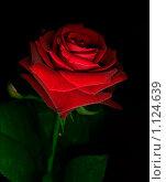 Красное на черном. Стоковое фото, фотограф Galina Semenova / Фотобанк Лори