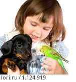 Купить «Девочка вместе с собакой и попугаем», фото № 1124919, снято 4 апреля 2009 г. (c) Алексей Многосмыслов / Фотобанк Лори