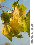 Осенняя пора. Стоковое фото, фотограф Игорь Жуленко / Фотобанк Лори