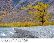 Одинокая лиственница на берегу Байкала. Стоковое фото, фотограф Ипполитов Александр / Фотобанк Лори