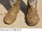 Рабочие сапоги. Стоковое фото, фотограф Владимир Гуссар / Фотобанк Лори