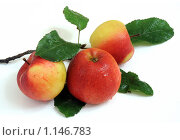Яблоки на белом. Стоковое фото, фотограф Виталий Гречко / Фотобанк Лори