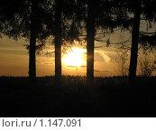 Закат сквозь деревья, яркий солнечный свет. Стоковое фото, фотограф Alexander Pasichenko / Фотобанк Лори