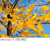 Купить «Осенний лес», фото № 1150483, снято 13 октября 2009 г. (c) Кирпинев Валерий / Фотобанк Лори