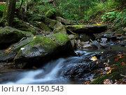 Горный ручей. Стоковое фото, фотограф Гордиенко Олег / Фотобанк Лори