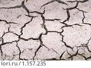 Купить «Треснутая просоленная земля», фото № 1157235, снято 17 июня 2008 г. (c) Лилия Барладян / Фотобанк Лори