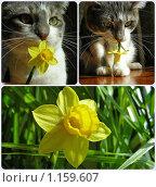 Купить «Серый кот с цветочком», эксклюзивное фото № 1159607, снято 25 апреля 2009 г. (c) lana1501 / Фотобанк Лори