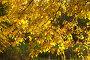 Золотая осенняя листва, фото № 1164739, снято 24 сентября 2006 г. (c) Бабенко Денис Юрьевич / Фотобанк Лори