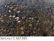 Купить «Галька в воде», фото № 1167591, снято 8 сентября 2009 г. (c) Лукьянов Иван / Фотобанк Лори