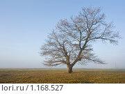 Дуб без листвы. Стоковое фото, фотограф Евгений Нелихов / Фотобанк Лори