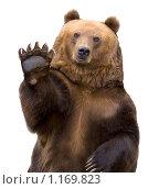 Купить «Бурый медведь приветствует лапой на белом фоне», фото № 1169823, снято 18 сентября 2007 г. (c) Василий Вишневский / Фотобанк Лори