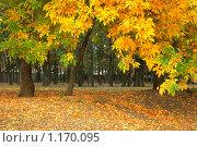 Купить «Пейзаж в осеннем городском парке», фото № 1170095, снято 9 октября 2009 г. (c) Александр Куличенко / Фотобанк Лори