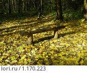 Купить «Скамейка в парке», эксклюзивное фото № 1170223, снято 11 октября 2009 г. (c) lana1501 / Фотобанк Лори