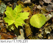 Купить «Опавшие листья», эксклюзивное фото № 1170231, снято 11 октября 2009 г. (c) lana1501 / Фотобанк Лори