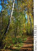 Купить «Осенний лес», эксклюзивное фото № 1170531, снято 7 октября 2009 г. (c) lana1501 / Фотобанк Лори